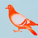 Orange Pigeon, by Jane